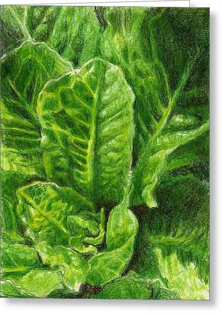 Steve Asbell Greeting Cards - Romaine Unfurling Greeting Card by Steve Asbell
