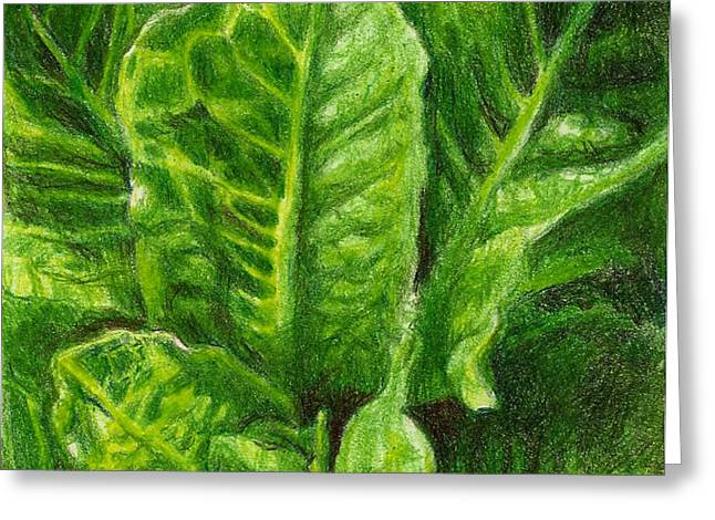 Romaine Unfurling Greeting Card by Steve Asbell
