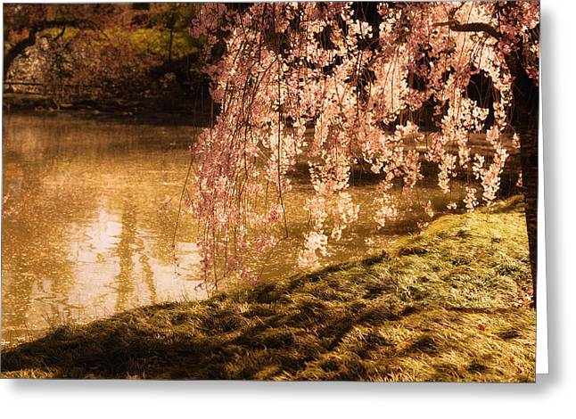 Weeping Photographs Greeting Cards - Romance - Sunlight through Cherry Blossoms Greeting Card by Vivienne Gucwa