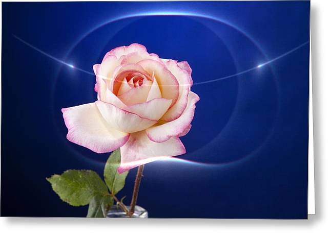 Flower Still Life Prints Greeting Cards - Romance Rose Greeting Card by M K  Miller
