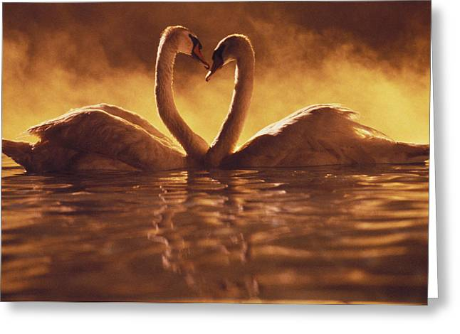 Special Moment Greeting Cards - Romantic African Swans Greeting Card by Brent Black - Printscapes