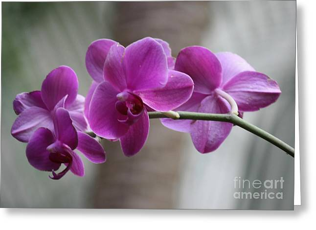 Soft Purple Greeting Cards - Romantic Purple Orchids Greeting Card by Carol Groenen