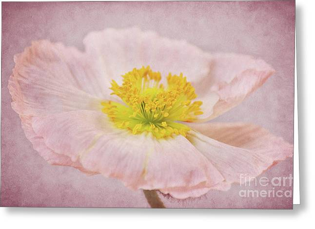 Romantico Greeting Card by Angela Doelling AD DESIGN Photo and PhotoArt