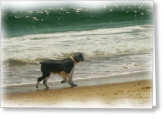 Dog Beach Card Greeting Cards - Romp On The Beach  Greeting Card by Susan Lipschutz