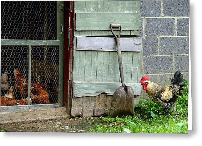 Rooster And Hens Greeting Card by Lisa Phillips