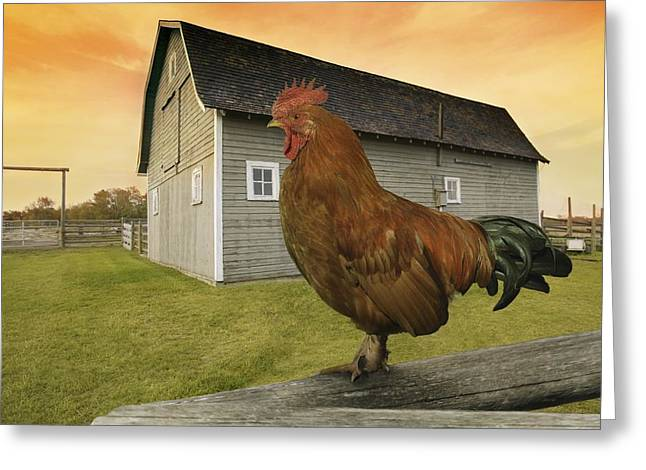 Barn Yard Greeting Cards - Rooster Greeting Card by Don Hammond