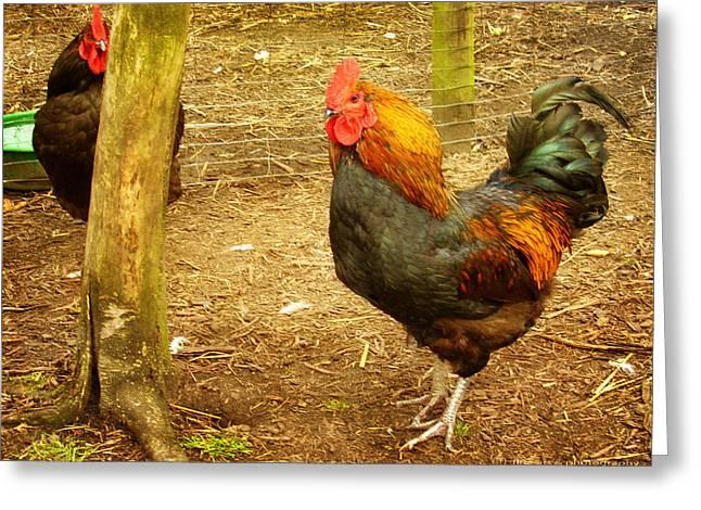 Rooster farm Greeting Card by Yvon van der Wijk