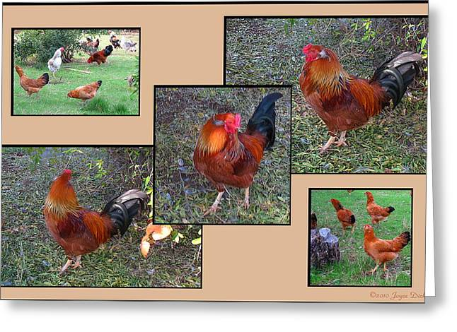 Chicken Laying Eggs Greeting Cards - Rooster Red Greeting Card by Joyce Dickens