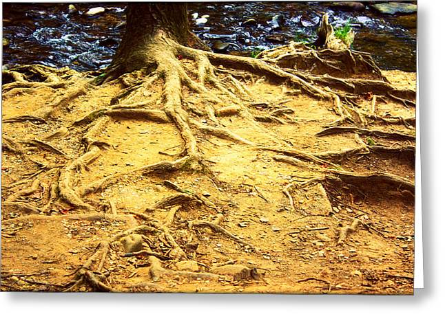 Tree Roots Greeting Cards - Root of Nature Greeting Card by Susie Weaver