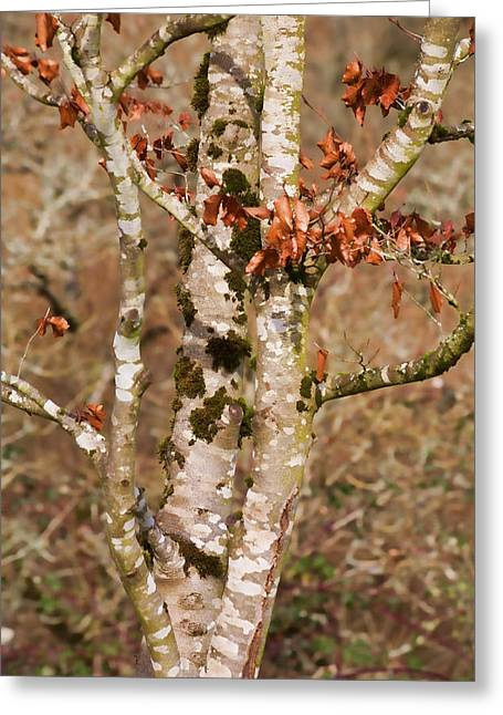 Mossy Trees Greeting Cards - Rooted by the River Greeting Card by Bonnie Bruno