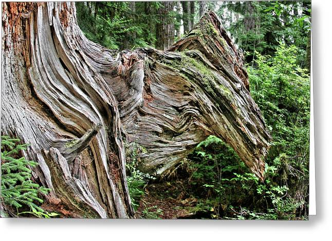 Roots Greeting Cards - Roots - Welcome to Olympic National Park WA USA Greeting Card by Christine Till