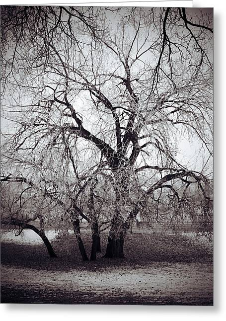 Edmonton Photographer Greeting Cards - Roots And Flutes  Greeting Card by Jerry Cordeiro