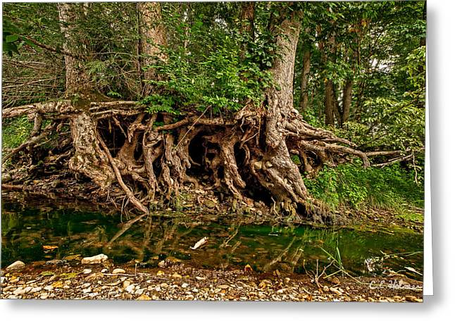 Tree Roots Greeting Cards - Roots Greeting Card by Christopher Holmes