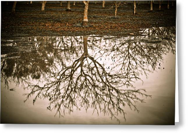 Sonoma County Greeting Cards - Roots Greeting Card by Derek Selander