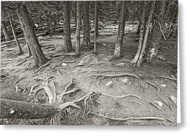 Tree Roots Photographs Greeting Cards - Roots Greeting Card by James Steele