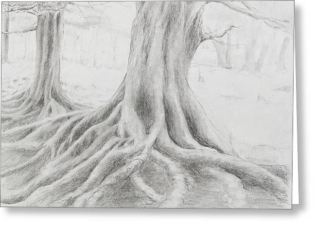 Tree Roots Drawings Greeting Cards - Roots Greeting Card by Jean Moule