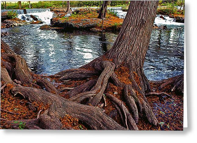 Roots Mixed Media Greeting Cards - Roots on the River Greeting Card by Stephen Anderson