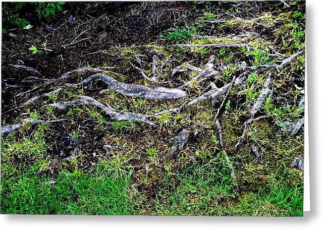 Tree Roots Greeting Cards - Roots Greeting Card by Randall Weidner