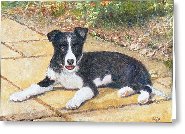 Collie Pastels Greeting Cards - RORY border collie puppy Greeting Card by Richard James Digance