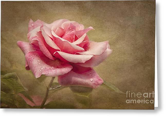 """cheryl Davis"" Greeting Cards - Rose Delight Greeting Card by Cheryl Davis"