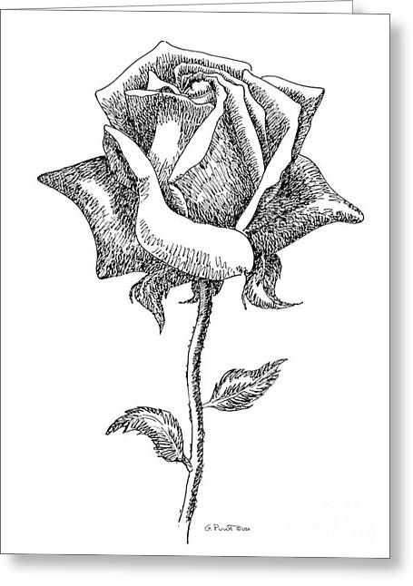 Calla Lily Drawings Greeting Cards - Rose Drawings Black-White 5 Greeting Card by Gordon Punt