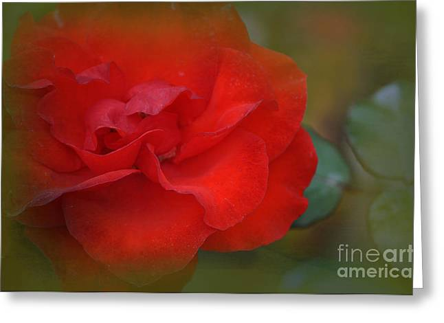 Wein Greeting Cards - Rose Dream Greeting Card by Mary Machare