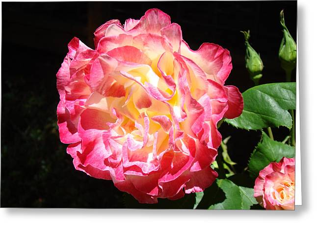Mother Framed Prints Greeting Cards - Rose Floral Fine Art Prints Pink Roses Flower Greeting Card by Baslee Troutman