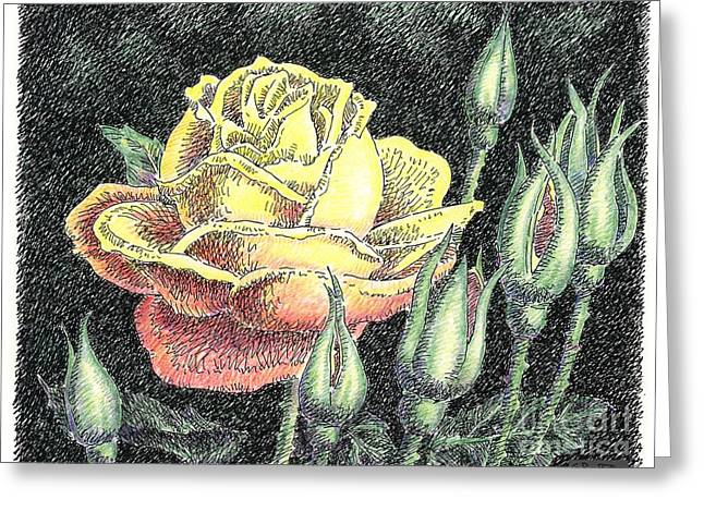 Roses Greeting Cards - Rose Flower Drawing 4 Greeting Card by Gordon Punt
