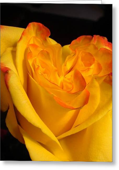 Just Because Greeting Cards - Rose Heart Greeting Card by Margaret Bobb