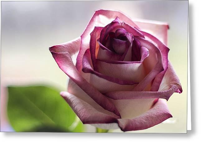 Rose In My Window Greeting Card by Bill Tiepelman
