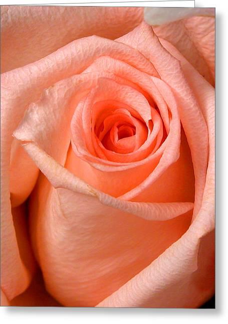 Myeress Greeting Cards - Rose Greeting Card by Joe Myeress