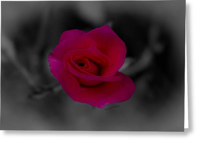 Rose of Solitude Greeting Card by DigiArt Diaries by Vicky B Fuller