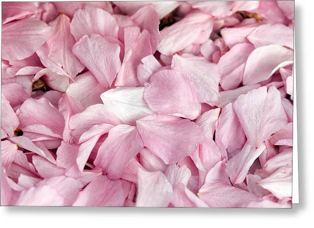 Rosa Sp. Greeting Cards - Rose Petals (rosa Sp.) Greeting Card by Georgette Douwma