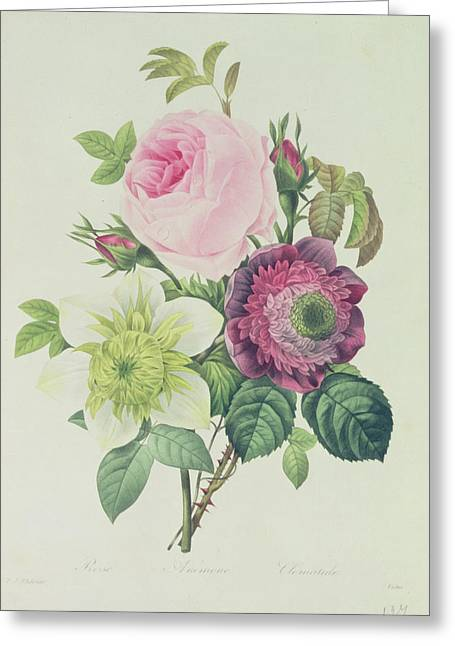 Flower Buds Greeting Cards - Rose Greeting Card by Pierre Joseph Redoute