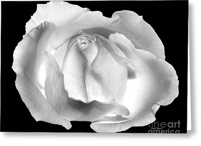 Black Berries Greeting Cards - Rose Portrait Greeting Card by Diane E Berry