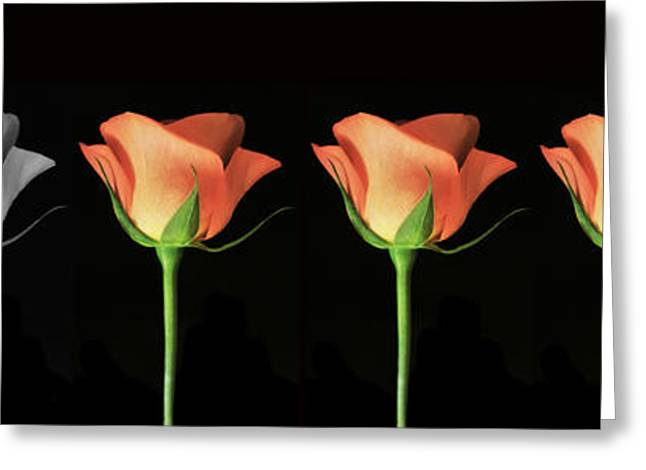 Floral Digital Art Digital Art Greeting Cards - Rose Poster. Greeting Card by Terence Davis