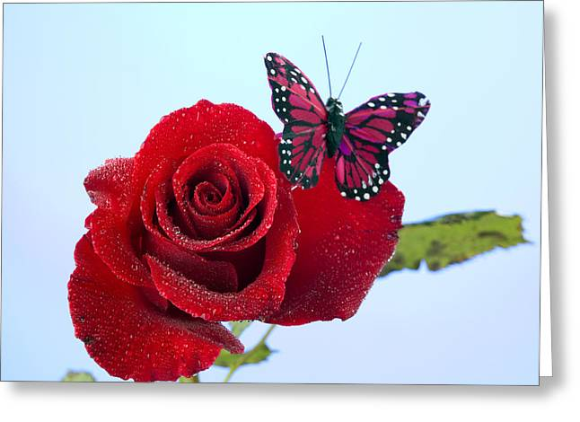 Bug Framed Prints Greeting Cards - Rose Red Butterfly Isolated on Blue Greeting Card by M K  Miller