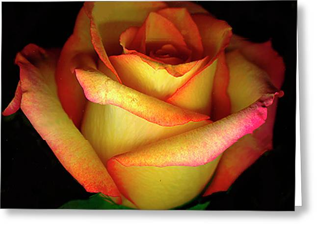 Digital Image Greeting Cards - Rose Scan Day 3 No Lid Greeting Card by Paul Shefferly