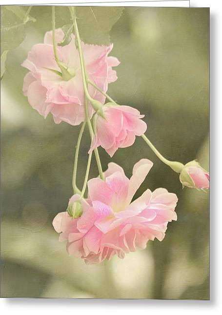 Close Focus Floral Greeting Cards - Rose Vine Greeting Card by Kim Hojnacki