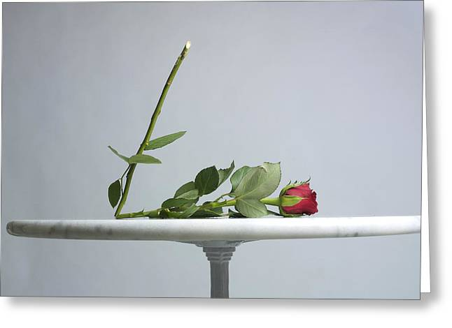 With Love Photographs Greeting Cards - Rose with a broken stem on a table. Greeting Card by Bernard Jaubert