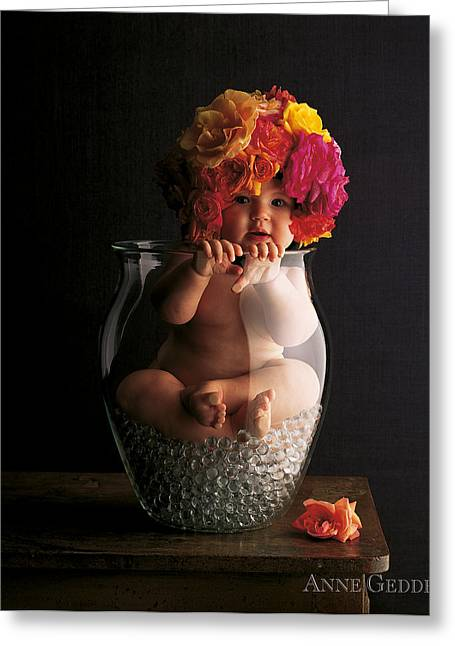 Garden Flower Greeting Cards - Roses Greeting Card by Anne Geddes