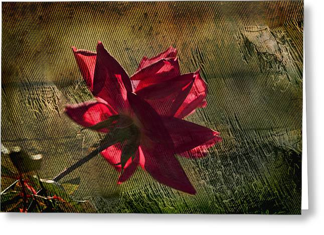 Tears Greeting Cards - Roses Are Red with a bit of Grunge Greeting Card by Kathy Clark