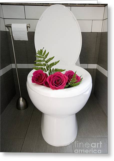 Domestic Bathroom Greeting Cards - Roses in a Toilet Greeting Card by Marlene Ford