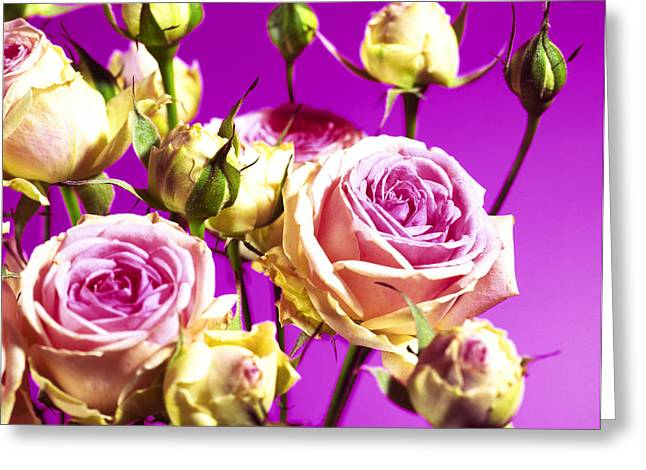Rosa Sp. Greeting Cards - Roses (rosa Sp.) Greeting Card by Johnny Greig