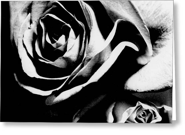 Roses Study 1 Greeting Card by Lisa  Spencer
