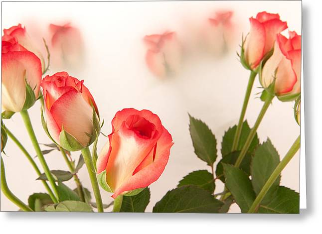 Roses Greeting Card by Tom Gowanlock