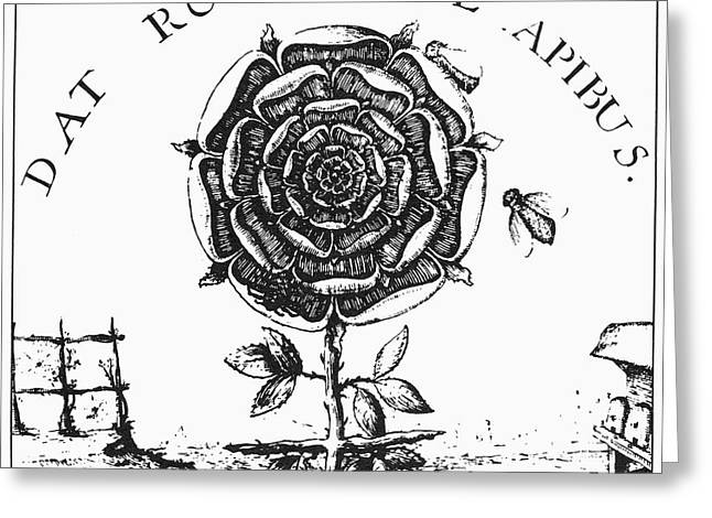 Fludd Greeting Cards - Rosicrucianism Greeting Card by Granger
