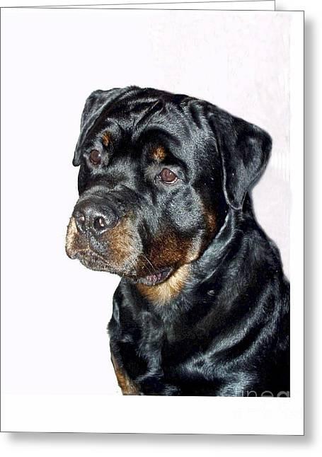 Rottweiler 1539 Greeting Card by Larry Matthews