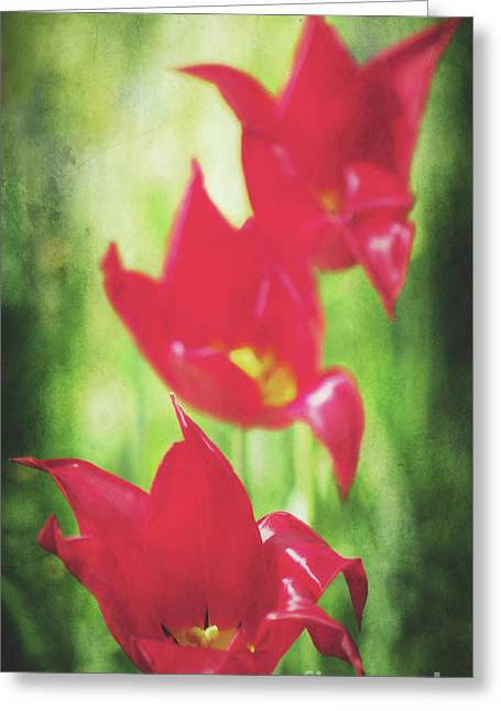 Decorativ Photographs Greeting Cards - Rouge Greeting Card by Angela Doelling AD DESIGN Photo and PhotoArt