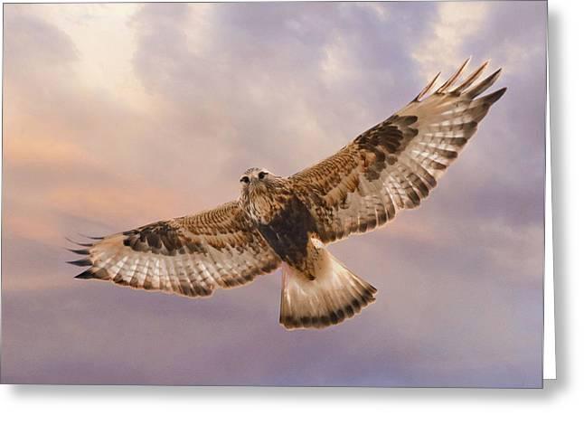 Legs Pyrography Greeting Cards - Rough legged Hawk Greeting Card by David Martorelli